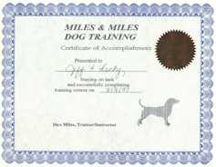 Check out Miles and Miles Dog Training!
